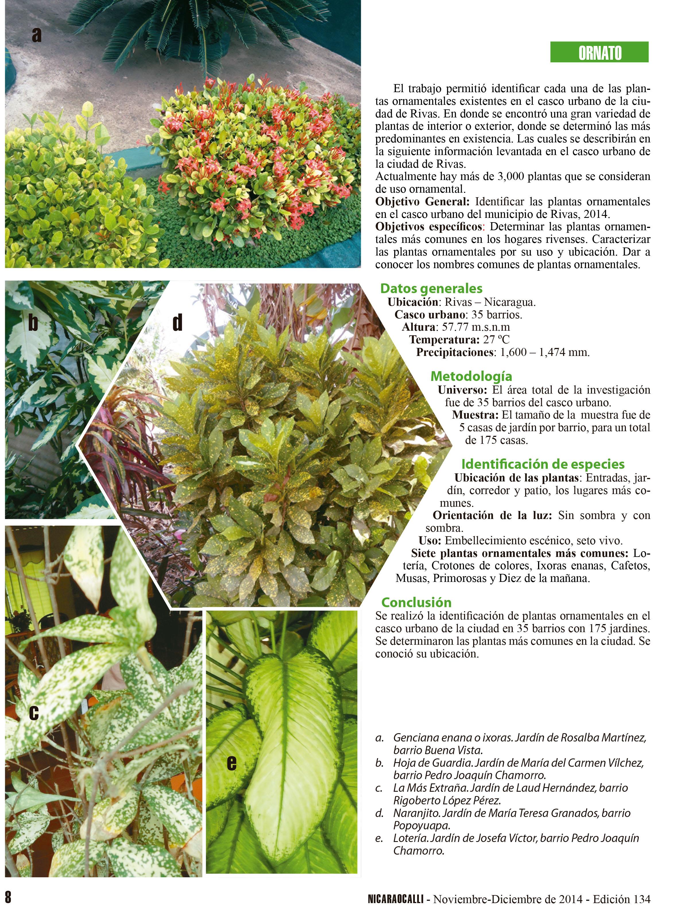 Plantas ornamentales en jardines urbanos nicaraocalli for 2 plantas ornamentales